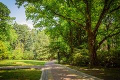 Paisaje del verano en jardín tropical Arboreto de Sochi imágenes de archivo libres de regalías