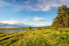 paisaje del verano en la orilla del río con los árboles de pino, Rusia de Ural, Imagen de archivo libre de regalías