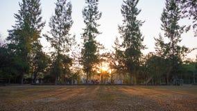 Paisaje del verano en la salida del sol árboles de pino que crecen en un campo y un s Fotografía de archivo