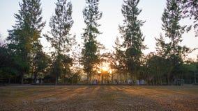 Paisaje del verano en la salida del sol árboles de pino que crecen en un campo y un s Fotos de archivo
