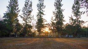 Paisaje del verano en la salida del sol árboles de pino que crecen en un campo y un s Imagen de archivo libre de regalías