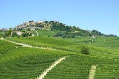 Paisaje del verano en Langhe (Italia) Foto de archivo