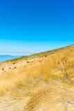 Paisaje del verano en las montañas Imágenes de archivo libres de regalías