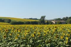 Paisaje del verano en los marzos (Italia) Fotos de archivo