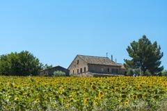 Paisaje del verano en los marzos (Italia) Foto de archivo libre de regalías