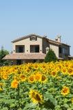 Paisaje del verano en los marzos (Italia) Imagen de archivo libre de regalías
