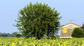 Paisaje del verano en los marzos (Italia) Imágenes de archivo libres de regalías