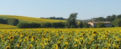 Paisaje del verano en los marzos (Italia) Foto de archivo