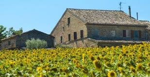 Paisaje del verano en los marzos (Italia) Imagen de archivo