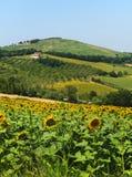 Paisaje del verano en los marzos (Italia) Imagenes de archivo