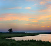 Paisaje del verano temprano por la mañana en una orilla de la charca Fotografía de archivo libre de regalías