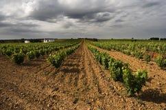Paisaje del viñedo Fotografía de archivo libre de regalías