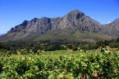 Paisaje del viñedo de la montaña fotografía de archivo
