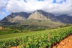 Paisaje del viñedo de la montaña foto de archivo