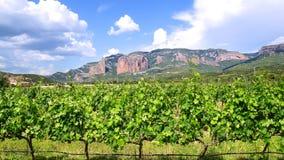 Paisaje del viñedo de las uvas del lagar Foto de archivo libre de regalías