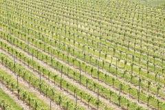 Paisaje del viñedo en el rttemberg Alemania del ¼ de Kaiserstuhl Bischoffingen Baden WÃ Fotos de archivo libres de regalías