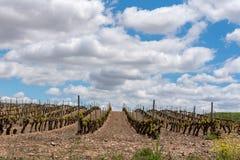 Paisaje del viñedo en La Rioja, España foto de archivo