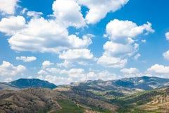 Paisaje del viñedo en montaña fotografía de archivo
