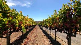 Paisaje del viñedo en Napa Valley almacen de metraje de vídeo