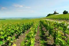 Paisaje del viñedo, Montagne de Reims, Francia Imagen de archivo