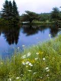 Paisaje del viento del río y de la flor Fotografía de archivo