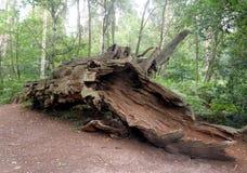 Paisaje derribado del árbol Imagen de archivo libre de regalías