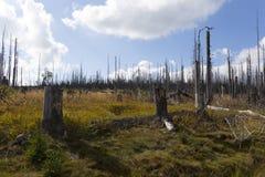 Paisaje devastado de la montaña en Sumava de Kyrill orcan, montañas en al sur Checo foto de archivo