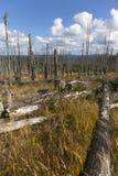 Paisaje devastado de la montaña en Sumava de Kyrill orcan, montañas en al sur Checo fotografía de archivo