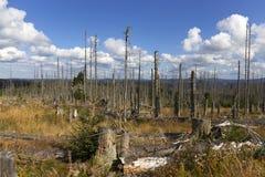Paisaje devastado de la montaña en Sumava de Kyrill orcan, montañas en al sur Checo foto de archivo libre de regalías