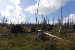 Paisaje devastado de la montaña en Sumava de Kyrill orcan, montañas en al sur Checo imagenes de archivo