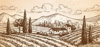Paisaje dibujado mano del viñedo