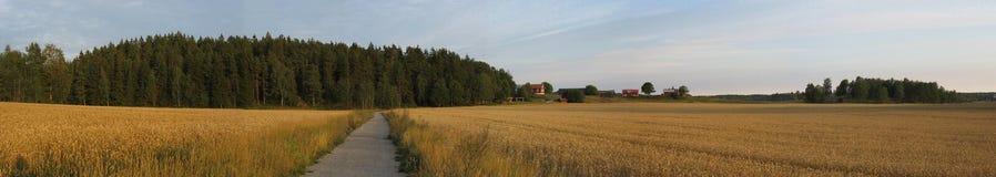 Paisaje durante verano en Suecia (Angarnssjaangen) fotografía de archivo