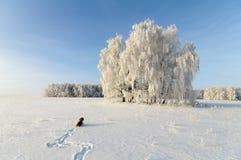 Paisaje e inglés cocker spaniel del invierno Fotografía de archivo