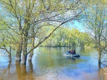 Paisaje El río salió del cauce del río e inundó los árboles de abedul Los árboles están en el agua Un barco en el carrie del agua Fotos de archivo