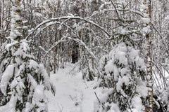 Paisaje en bosque del invierno Imagen de archivo
