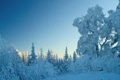 Paisaje en colores pastel azul del invierno Foto de archivo
