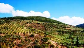 Paisaje en Creta con Olive Trees In Greece Fotografía de archivo libre de regalías