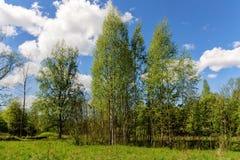 Paisaje en el bosque de la primavera Imágenes de archivo libres de regalías