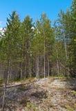 Paisaje en el bosque de la primavera Fotografía de archivo
