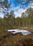 Paisaje en el bosque de la primavera Fotos de archivo libres de regalías