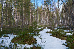 Paisaje en el bosque de la primavera Imagenes de archivo