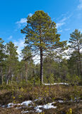 Paisaje en el bosque de la primavera Fotografía de archivo libre de regalías