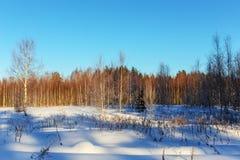 Paisaje en el bosque del invierno Imagen de archivo