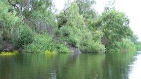 Paisaje en el delta de Danubio almacen de video