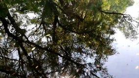 Paisaje en el delta de Danubio, Rumania - im?genes de v?deo almacen de video