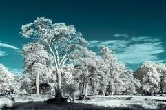 Paisaje en el infrarrojo Imagen de archivo libre de regalías
