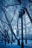 Paisaje en el parque con los árboles Fotografía de archivo