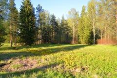 Paisaje en el parque en primavera Imagen de archivo libre de regalías