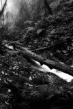 Paisaje en Kew Mae Pan Nature Trail Foto de archivo libre de regalías