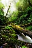 Paisaje en Kew Mae Pan Nature Trail Imagen de archivo libre de regalías